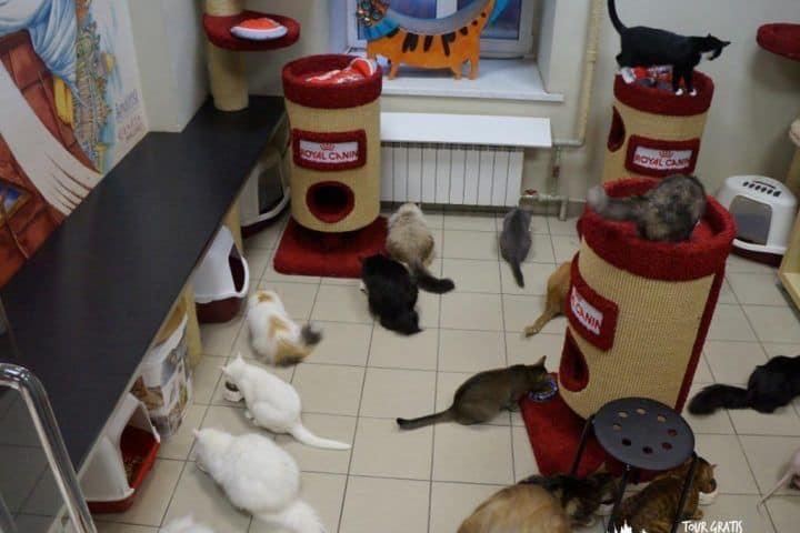 República-de-gatos