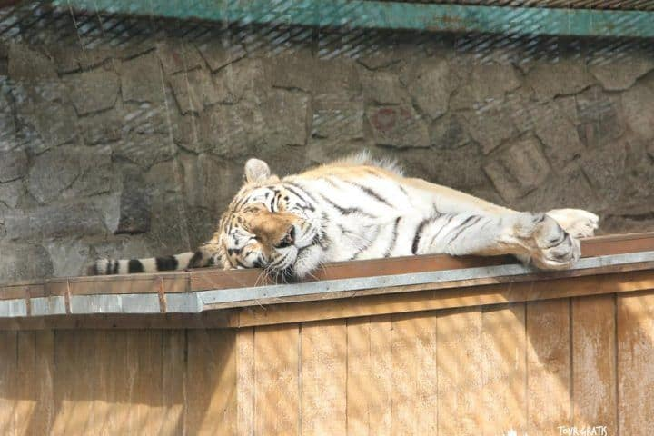 Zoológico-de-Leningrado