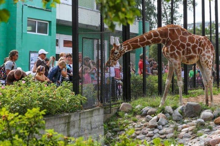Zoológico-de-Leningrado-san-petersburgo